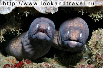 обитатели черного моря фото с названиями